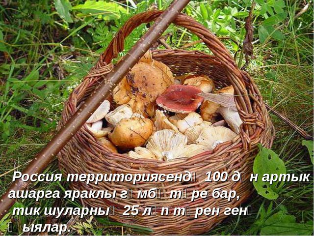 Россия территориясендә 100 дән артык ашарга яраклы гөмбә төре бар, тик шулар...