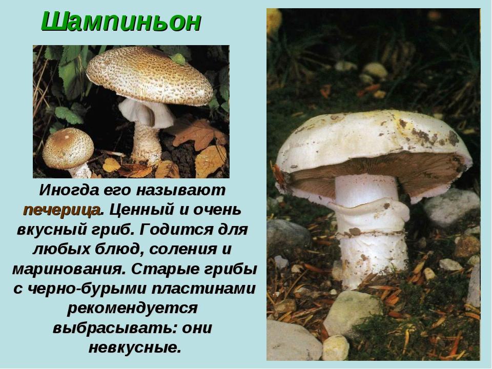 Шампиньон Иногда его называют печерица. Ценный и очень вкусный гриб. Годится...