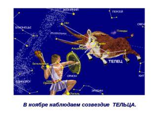 В ноябре наблюдаем созвездие ТЕЛЬЦА.
