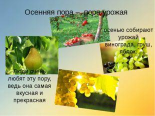 Осенняя пора – пора урожая осенью собирают урожай винограда, груш, яблок. Люд