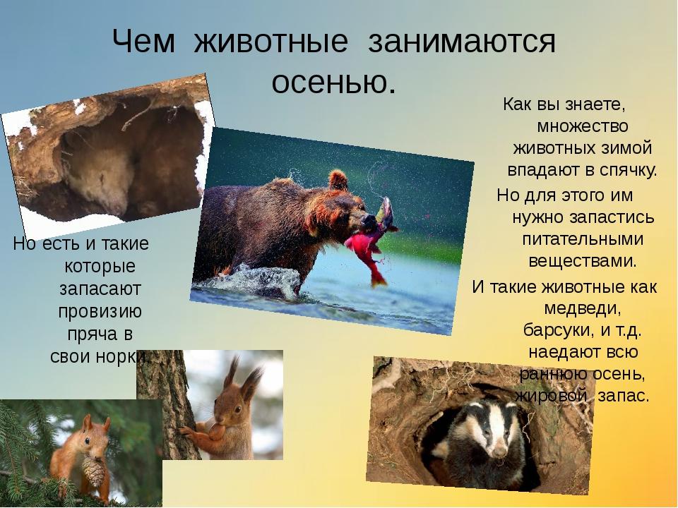 Чем животные занимаются осенью. Как вы знаете, множество животных зимой впада...