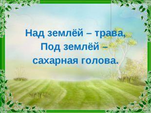 Над землёй – трава, Под землёй – сахарная голова.