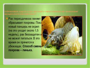 3.Хитиновый покров очень прочный и нерастяжимый как происходит процесс роста