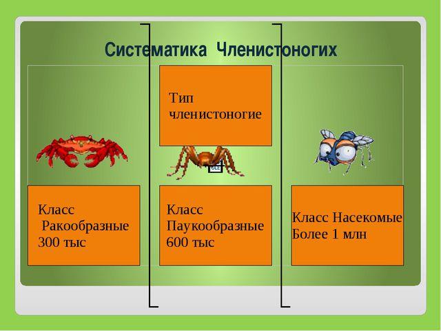Систематика Членистоногих