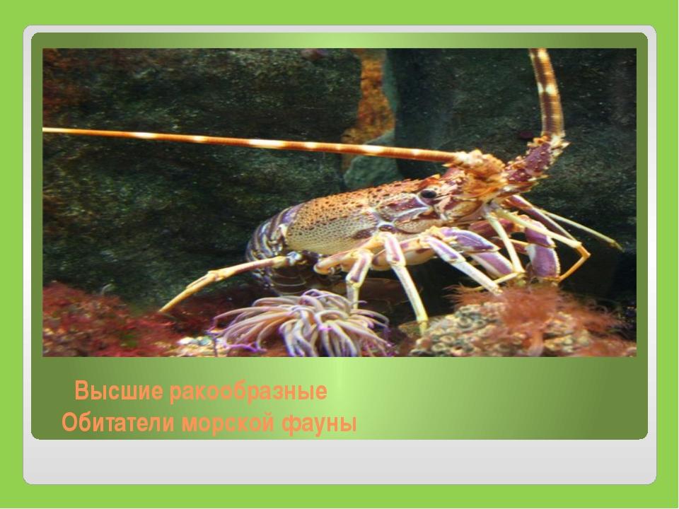 Высшие ракообразные Обитатели морской фауны