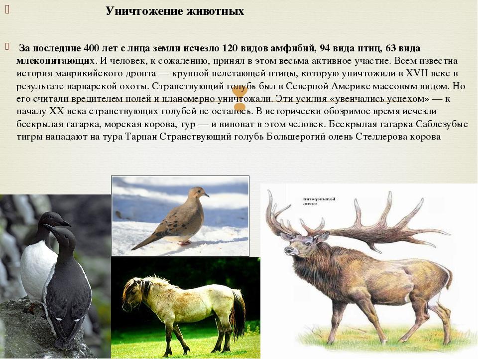 Уничтожение животных За последние 400 лет с лица земли исчезло 120 видов амф...