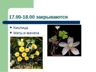 17.00-18.00 закрываются Кислица Мать-и-мачеха