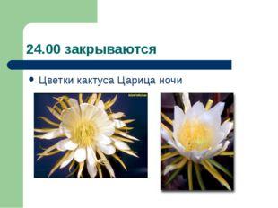 24.00 закрываются Цветки кактуса Царица ночи