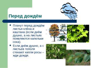 Перед дождём Плачут перед дождём листья клёна и каштана (если днём душно, а н