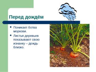 Перед дождём Поникает ботва моркови. Листья деревьев показывают свою изнанку
