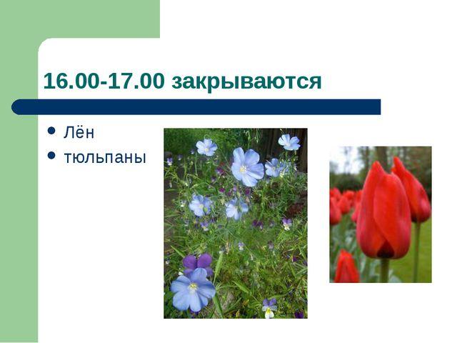 16.00-17.00 закрываются Лён тюльпаны