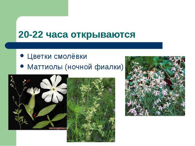 20-22 часа открываются Цветки смолёвки Маттиолы (ночной фиалки)