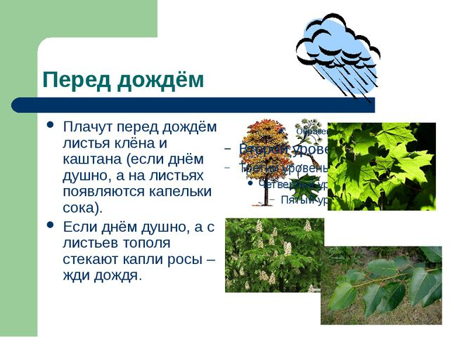 Перед дождём Плачут перед дождём листья клёна и каштана (если днём душно, а н...