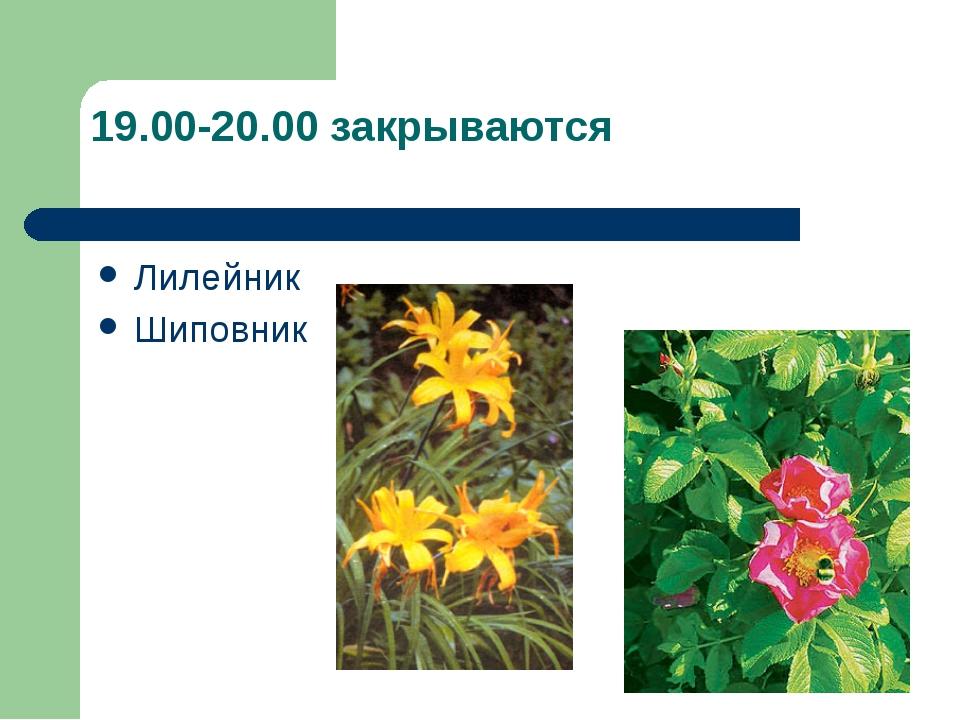 19.00-20.00 закрываются Лилейник Шиповник