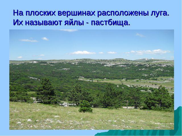 На плоских вершинах расположены луга. Их называют яйлы - пастбища.
