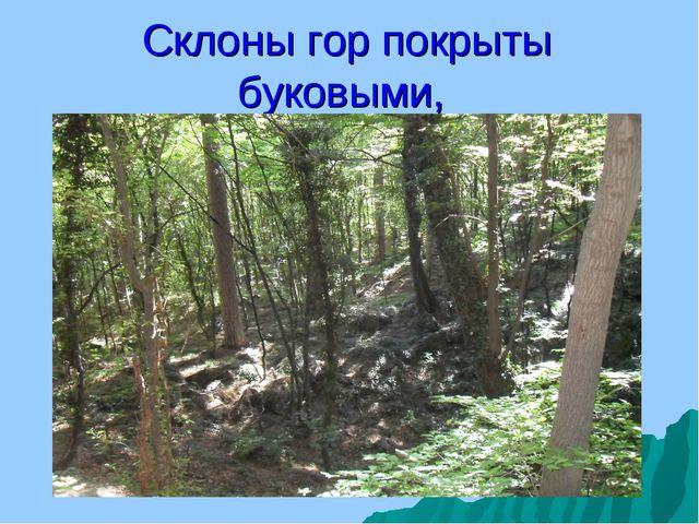 Склоны гор покрыты буковыми,
