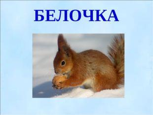 БЕЛОЧКА