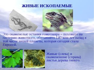 ЖИВЫЕ ИСКОПАЕМЫЕ Это окаменелые останки гомеозавра – похожего на гаттерию жив