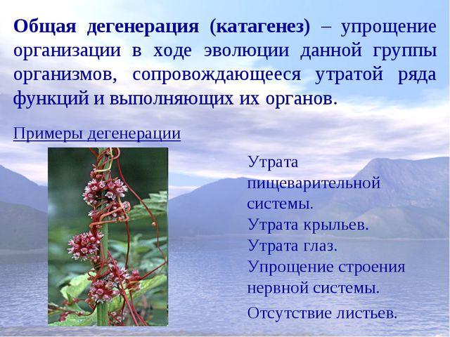 Общая дегенерация (катагенез) – упрощение организации в ходе эволюции данной...