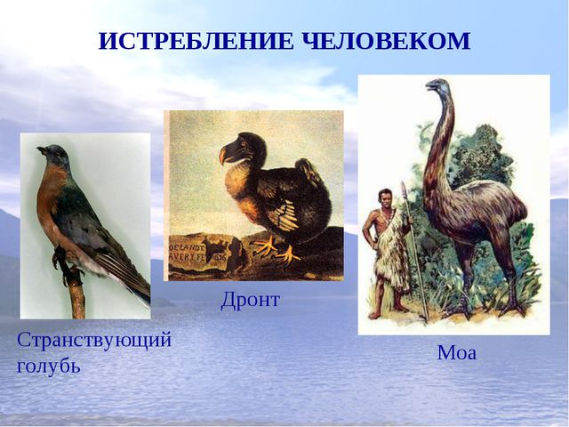 ИСТРЕБЛЕНИЕ ЧЕЛОВЕКОМ Странствующий голубь Дронт Моа