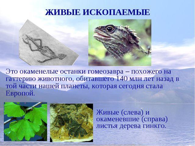 ЖИВЫЕ ИСКОПАЕМЫЕ Это окаменелые останки гомеозавра – похожего на гаттерию жив...