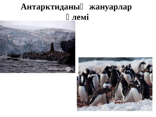 Антарктиданың жануарлар әлемі