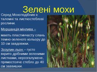 Зелені мохи Серед Мохоподібних є таломні та листкостеблові рослини. Моршанція