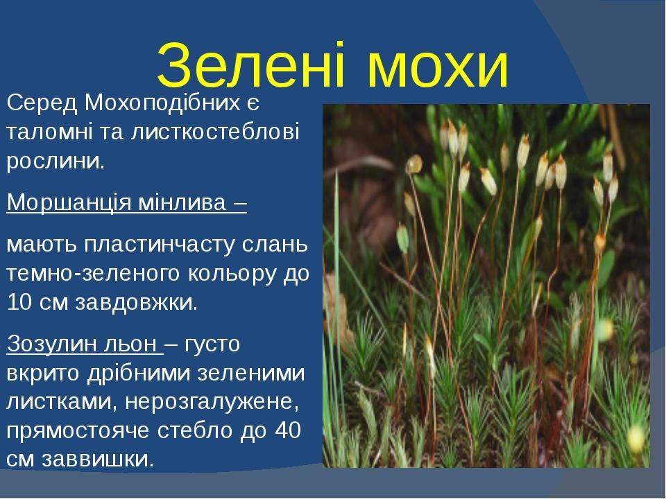 Зелені мохи Серед Мохоподібних є таломні та листкостеблові рослини. Моршанція...