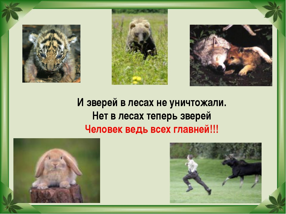 И зверей в лесах не уничтожали. Нет в лесах теперь зверей Человек ведь всех г...