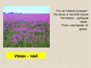 Что за травка угощает На лугах в лесной глуши Человека – добрым чаем, Пчёл- н