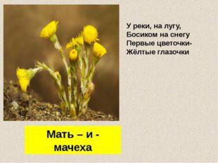 У реки, на лугу, Босиком на снегу Первые цветочки- Жёлтые глазочки Мать – и -
