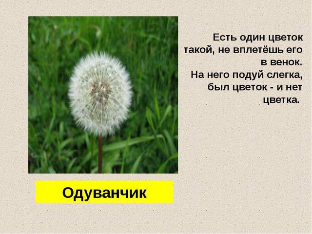 Есть один цветок такой, не вплетёшь его в венок. На него подуй слегка, был цв...
