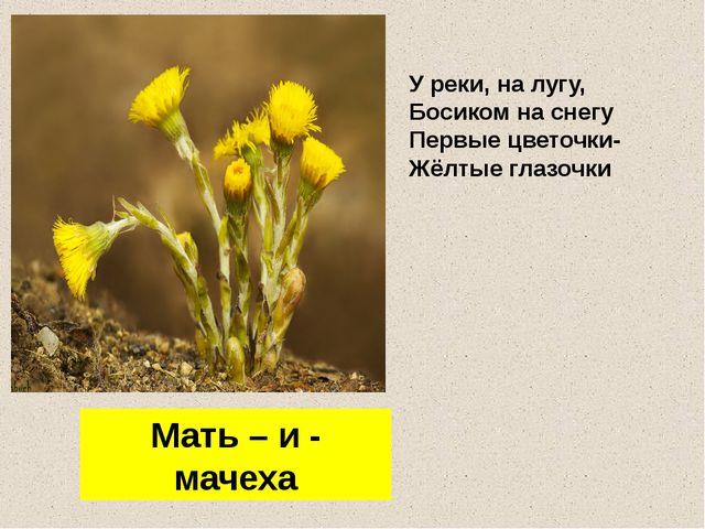 У реки, на лугу, Босиком на снегу Первые цветочки- Жёлтые глазочки Мать – и -...