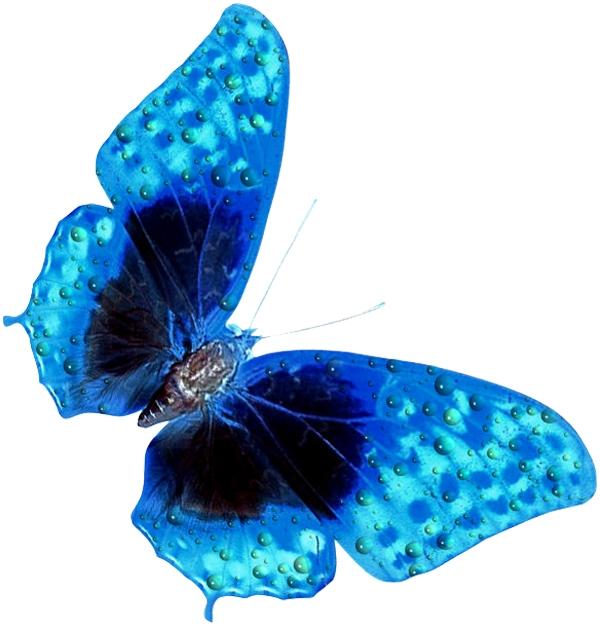 Анимированные картинки бабочки, марта поздравлениями для