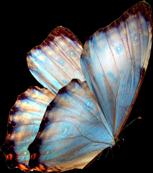 бабочка 6.png