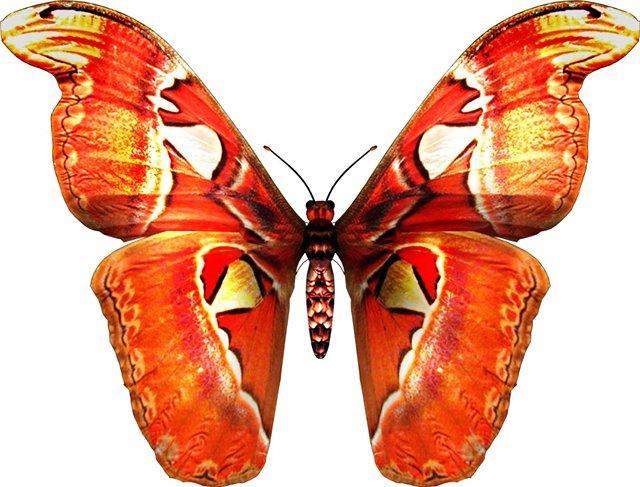 бабочка5.jpg