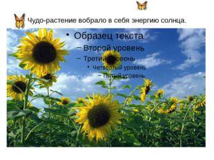 Чудо-растение вобрало в себя энергию солнца.