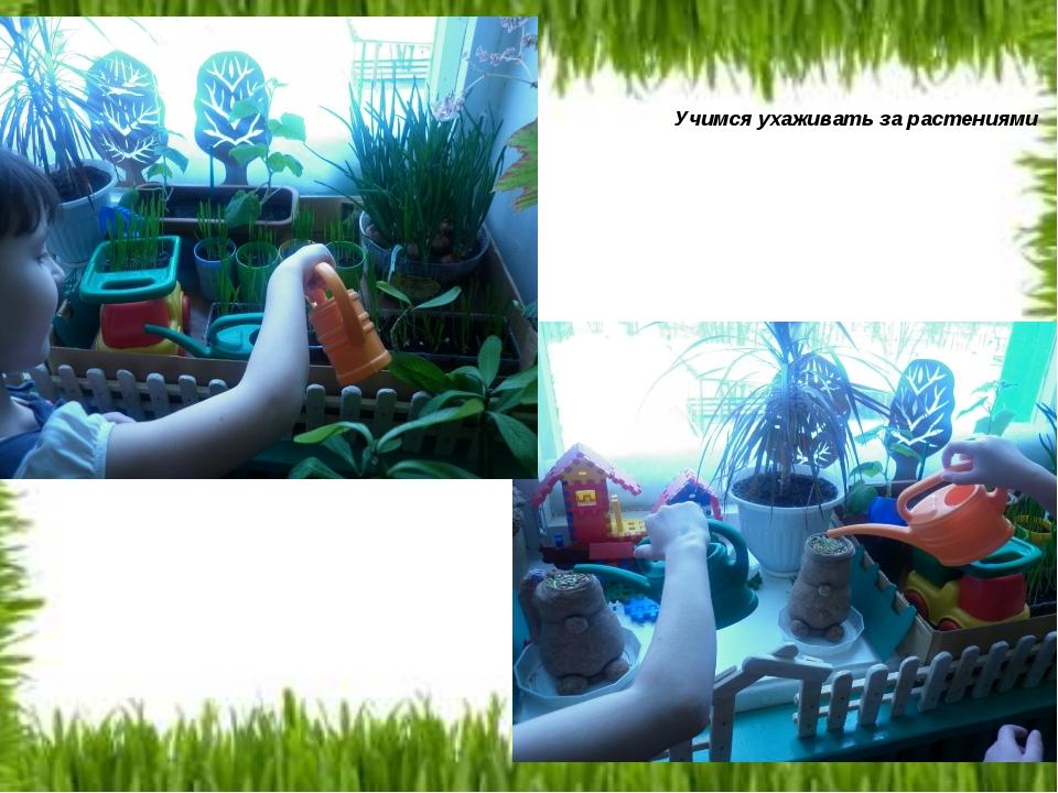 Учимся ухаживать за растениями