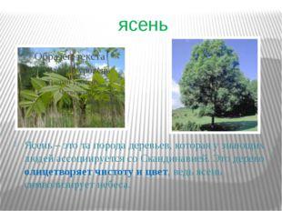 ясень Ясень – это та порода деревьев, которая у знающих людей ассоциируется с