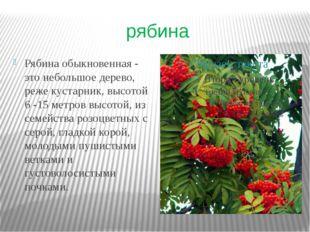 рябина Рябина обыкновенная - это небольшое дерево, реже кустарник, высотой 6