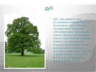 дуб Дуб - род деревьев, реже кустарников семейства буковых. Насчитывает около