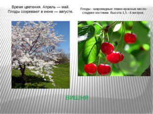 вишня Время цветения. Апрель — май. Плоды созревают в июне — августе. Плоды -