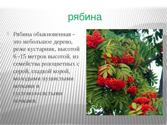 рябина Рябина обыкновенная - это небольшое дерево, реже кустарник, высотой 6...