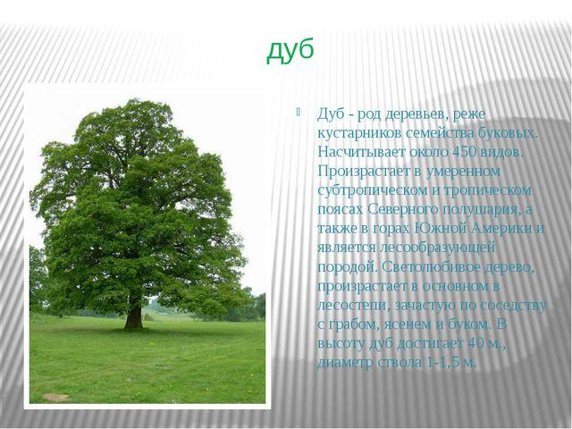 дуб Дуб - род деревьев, реже кустарников семейства буковых. Насчитывает около...
