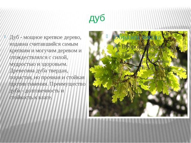 дуб Дуб - мощное крепкое дерево, издавна считавшийся самым крепким и могучим...
