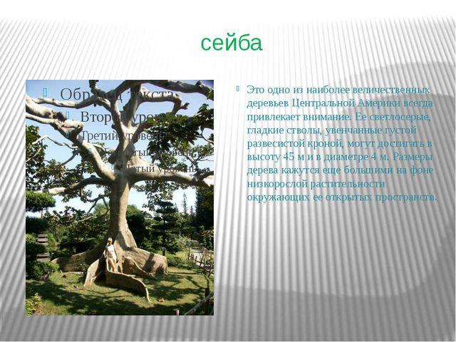 сейба Это одно из наиболее величественных деревьев Центральной Америки всегда...