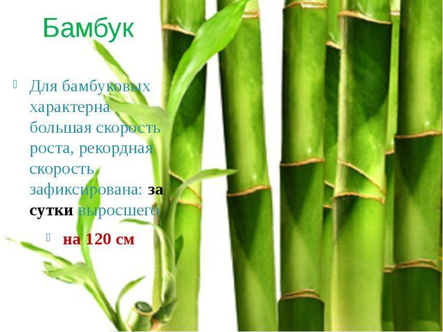 Бамбук Для бамбуковых характерна большая скорость роста, рекордная скорость з...