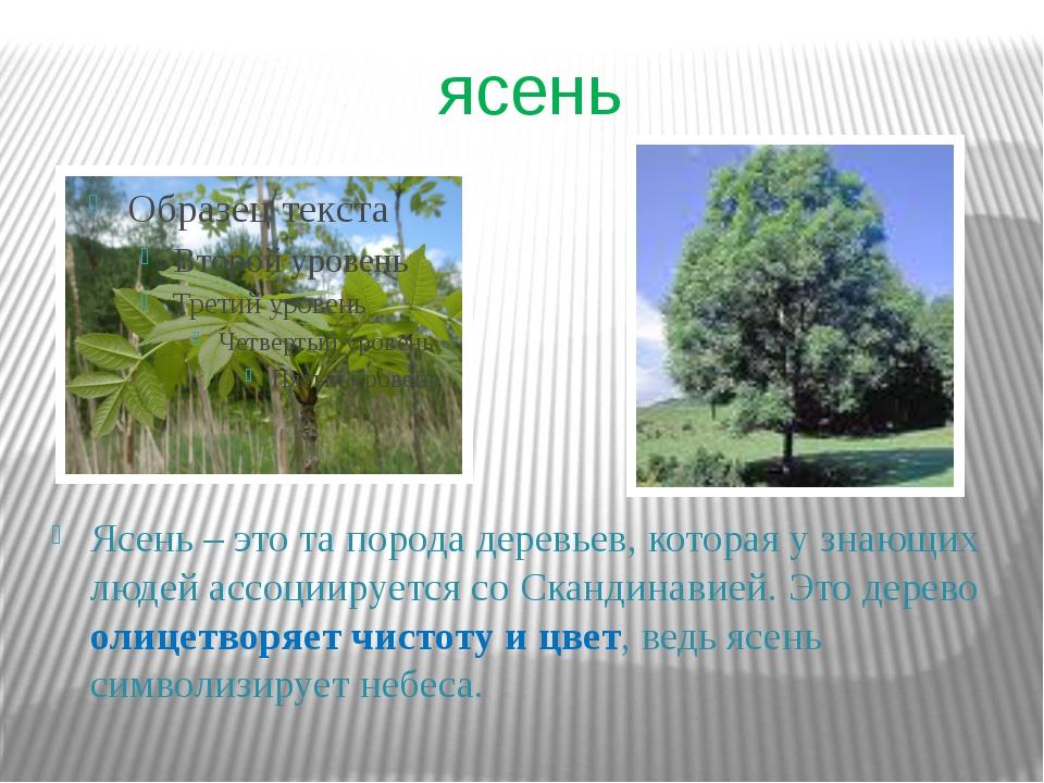 ясень Ясень – это та порода деревьев, которая у знающих людей ассоциируется с...