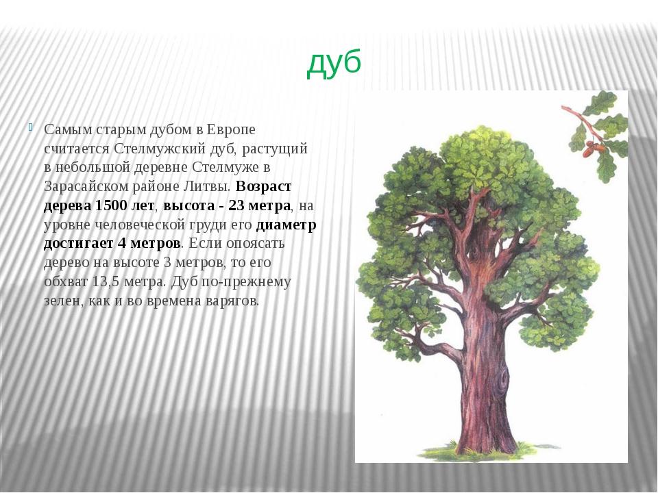 дуб Самым старым дубом в Европе считается Стелмужский дуб, растущий в небольш...