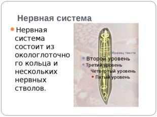 Нервная система Нервная система состоит из окологлоточного кольца и нескольки